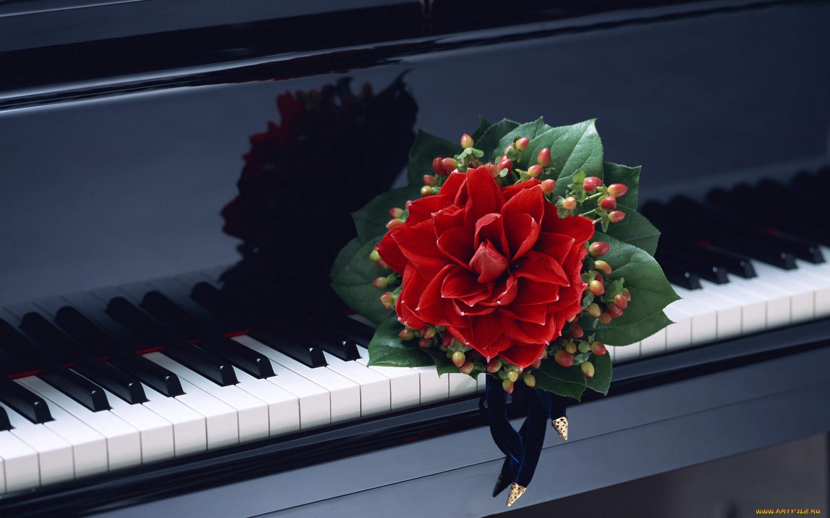 живые картинки с цветами и музыкой снимать, если